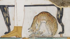 ancient cat explains why do cats like fish