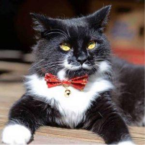 badass cat collars