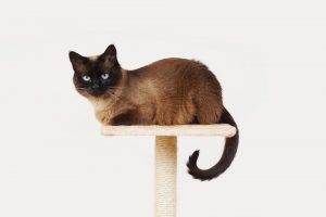 best priced cat tree with free shipping