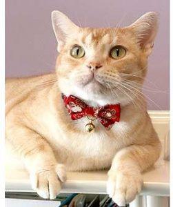 sophisticated cat collar