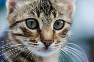 what is whisker fatigue