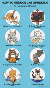 how to reduce cat shedding infographic