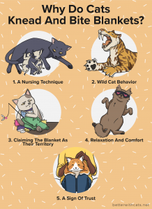 why do cats knead and bite blankets infographic