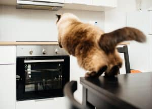essential oils to keep cats off counter