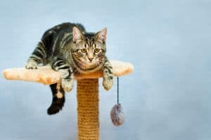 how to fix a wobbly cat tree