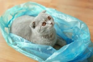 Why Do Cats Like To Sit On Plastic Bags