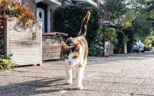 can cats walk backwards