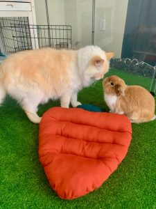 rabbit and cat meeting