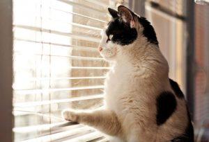 best portable outdoor cat enclosure