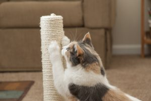 do declawed cats need scratching posts