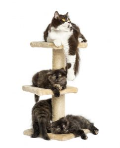 can cats share a cat tree?