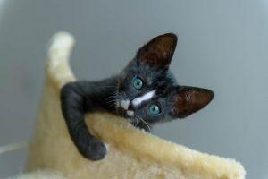 do cats need cat trees
