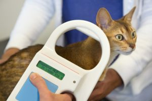 can you feel a cats microchip