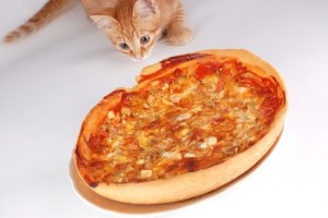 Cat Licked My Food- Can I Still Eat It