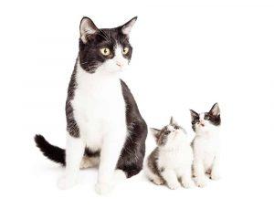 How Do Mom Cats Discipline Kittens