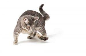 why do cats bat at things?