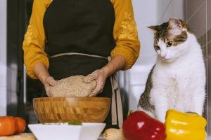 why doesn't my cat knead