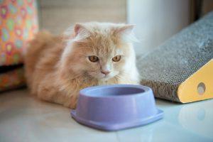 guar gum in cat food