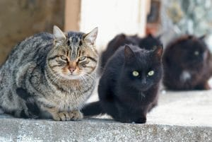 group of cats called clowder