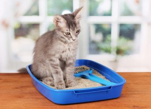 kitten sitting a mix of clumping and non-clumping litter