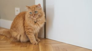 why do cats hate closed doors