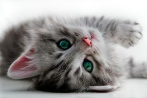 cat laying down and sighing