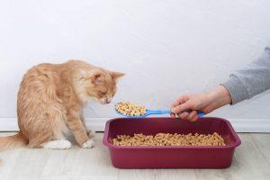 cat inspecting some wood pellet cat litter