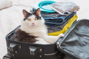 cat happily sitting in a packed suitcase