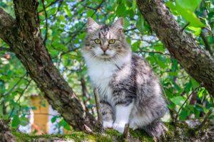 declawed cat in a tree
