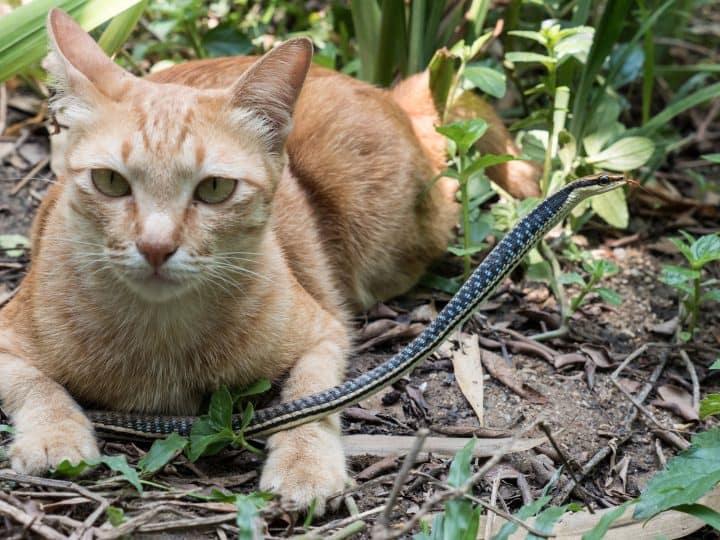 Can Cats Kill Snakes