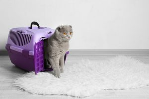 Can I Leave My Cat In A Carrier Overnight?