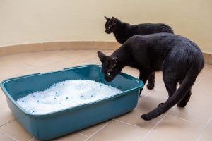 can two cats share the same litter box
