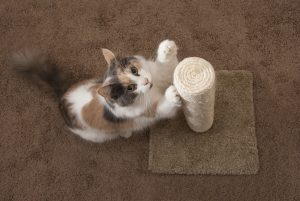 does a scratching post sharpen or dull a cats nails