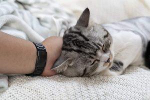 Why Do Cats Headbutt?