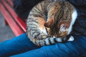 why do cats sleep in a ball