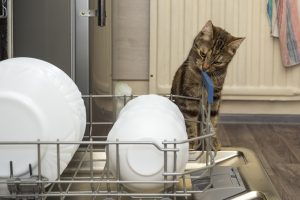 Can You Put A Litterbox In The Dishwasher?