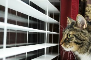 Do Cats Get Lonely When You Go On Vacation?
