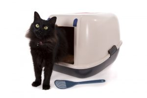 cat stepping out of litter box after using bathroom